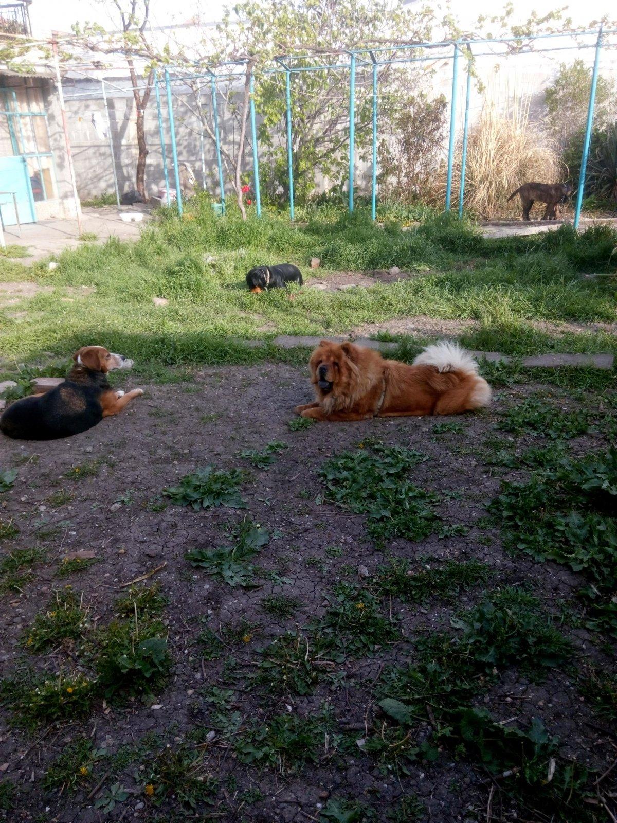 Обучение и Хотел за кучета-Условия