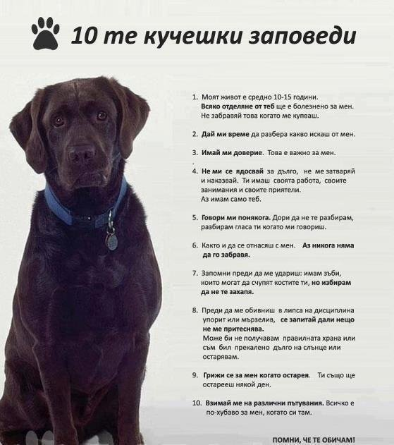 Dog Expert  Krasimir Kanev