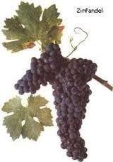 Най популярните сортове грозде за вино