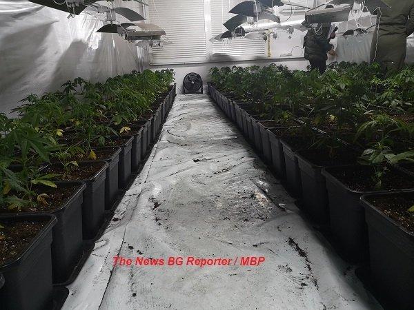 Разбиха лаборатория за марихуана в с. Черни Вит