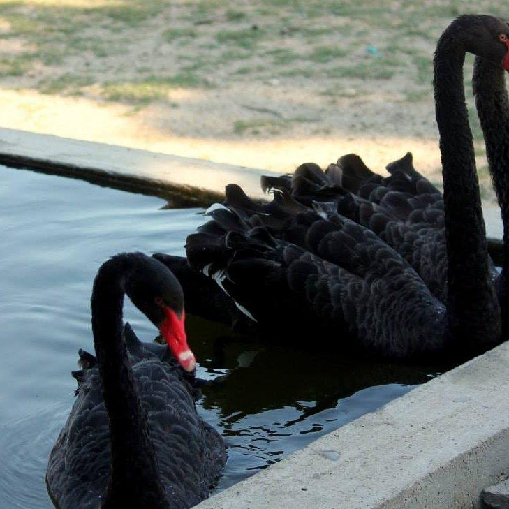 Зоокът- Хаджидимово